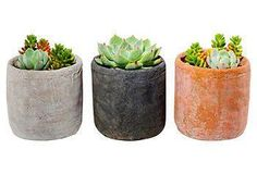 Everything you need to grow your own succulent terrariums and showcase your green thumb!