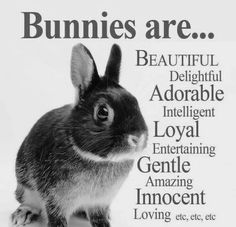 Yes they are from ameli bunny festival животные Funny Bunnies, Baby Bunnies, Cute Bunny, Bunny Rabbits, Adorable Bunnies, Bunny Bunny, House Rabbit, Pet Rabbit, Bunny Quotes