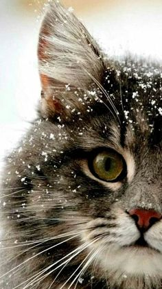 Snow never looked so adorable.