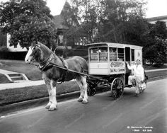 Dairies truck [delivery man with horse and wagon] Associated Dairies milk delivery man with horse and wagon, Vancouver, Dairies milk delivery man with horse and wagon, Vancouver, Horse Wagon, Horse Drawn Wagon, Old Pictures, Old Photos, Boston Pictures, Vintage Photographs, Vintage Photos, Vancouver, Man On Horse
