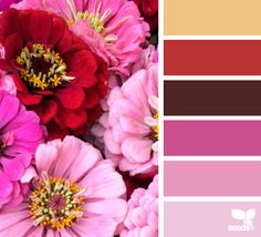 The zinnia hues are a nice bright break for the dull winter colors right now. #colorpalette