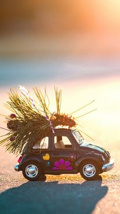 Car Miniature Photography, Cute Photography, Creative Photography, Volkswagen, Cute Pictures, Beautiful Pictures, Miniature Cars, Cute Little Things, Cute Cars