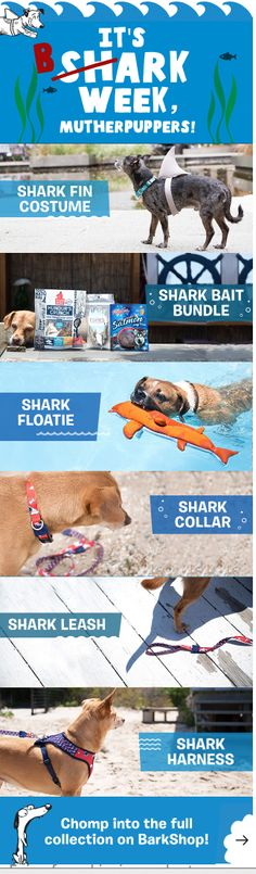 SharkWeek has gone to the dogs! Go swimming in bark-infested waters with no fear, and enjoy these fin-tastic pawducts!