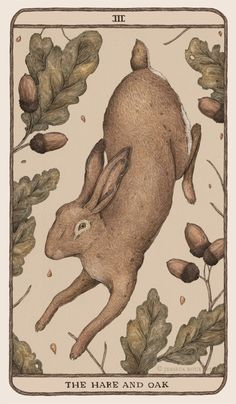 Ganymedes Rocks — jessicaroux: The Hare and Oak, the first card I've...