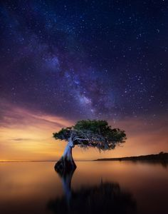 Paul Marcellini, Celestial Cypress  Central Florida, USA