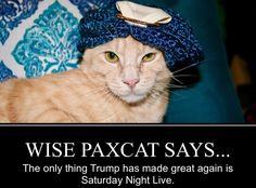 wisepaxcat.com, @WisePaxCat, politicats, democrat cats, pussies against Trump, RESIST