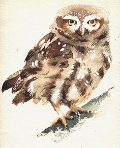 little owl by Kate Osborne Owl Art, Bird Art, Kate Osborne, Owl Photos, Great Horned Owl, Beautiful Owl, Watercolor Bird, Cute Owl, Watercolor Techniques