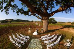 come book your tour today! Rustic Wedding, Our Wedding, Dream Wedding, California Wedding Venues, Vineyard Wedding, Rustic Chic, Event Venues, Northern California, Wine Tasting