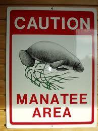 Save The Manatees ♥