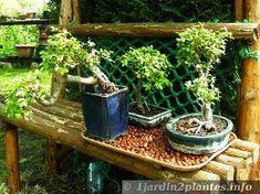 L'entretien du bonsaï