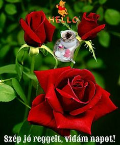 If you are thinking of rose gardening don't let this rumor stop you. While rose gardening can prove to be challenging, once you get the hang of it, it really isn't that bad. Amazing Flowers, Beautiful Roses, Beautiful Flowers, Rose Garden Design, Japanese Garden Design, Red And White Roses, Red Roses, Roses Gif, Types Of Roses