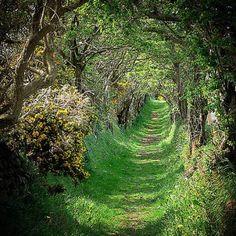 Ballynoe Stone Circle/Tree Tunnel. Downpatrick, Ireland