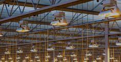 Looking for the Best LED Grow Lights? Grow your greenhouse, indoor & hydroponics garden with excite plant lighting systems. Lighting System, Track Lighting, Led Horticole, Indoor Hydroponics, Led Grow Lights, Ceiling Lights, Pictures, Check, Lights