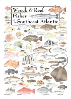 waterfowl identification chart - Google Search