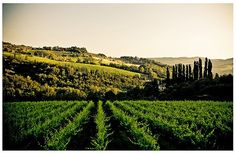 Central Italy: Food and wine of region