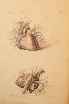 Grabado sobre las arterias del corazón «Introduction to surgery of arteries» Charles Bell (1801)