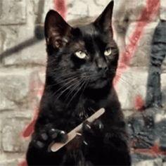 Manual de supervivencia por Salem