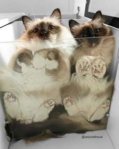Fun Stuff, Cats And Kittens, Kitty Cats, Cat Day, Cats Of Instagram, Comment, Cool Cats, Cat Lovers, Funny Cats