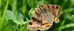 5 curiosidades bizarras sobre as mariposas - Mega Curioso
