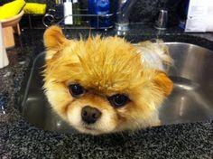 Boo the dog bath