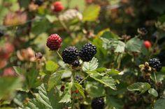 berry picking... :)