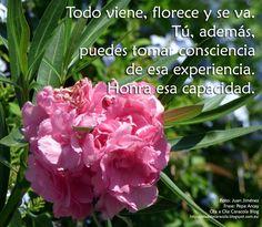 ... Todo viene florece y se va. Tú, además, puedes tomar consciencia de esa experiencia. Honra esa capacidad.