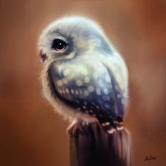 It's been a year since last I shared this cute owl painting. Owl Bird, Bird Art, Pet Birds, Cute Animal Drawings, Cute Drawings, Arte Do Kawaii, Owl Pictures, Owl Crafts, Baby Owls