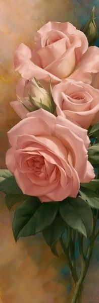 pink roses..