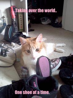 Scroll2Lol.com - Diamond loves her shoes.