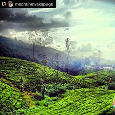 Breathtaking view by @madhuhewakapuge Reposted by @stockphotolk  Share your photographs with #stockphotolk Sign up on www.stockphoto.lk for free and convert your creativity into revenue! .  #estate #teaestate #teaplantation #photography #travelgram #travelpics #travelporn #traveldiary #travelawesome #travelblogger #travelphotography #travelisthenewclub #wanderlust #igers #igtravel #netgeo #travelsrilanka #exploresrilanka #heritage #culturalheritage #srilankanculture #instalike #instagood…