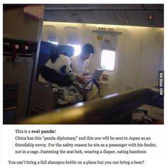 Funny pictures about Just traveling with my panda. Oh, and cool pics about Just traveling with my panda. Also, Just traveling with my panda. Panda China, Niedlicher Panda, Cute Panda, Happy Panda, Panda Triste, Panda Mignon, Panda Lindo, Funny Animals, Cute Animals