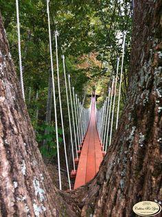 bridge between trunks