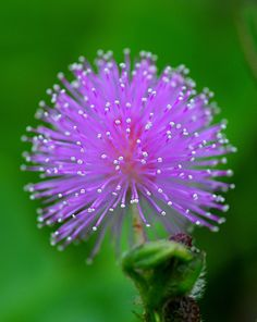 I could take a yard full of these!!!  Might be a weed, who knows, but it sure is a pretty one, if it is.