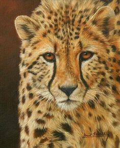 Cheetah painting by David Stribbling