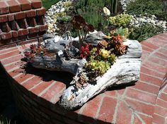 Driftwood Planter planted with succulents for entrance to home.