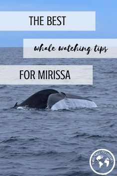 Rated one of the best places in the world to see the majestic blue whale, have a read to see your best options to go whale watching in Mirissa, Sri Lanka. Whale Watching | Sri Lanka | Mirissa | Blue Whales | #mirissa #whalewatching #srilanka #travelling #travelsrilanka