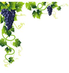 Grapevine Clip Art | 15 grape vine clip art free free cliparts that you can download to you ...