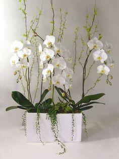 Blooming to inspire orchid arrangements pinterest Christmas orchid arrangements