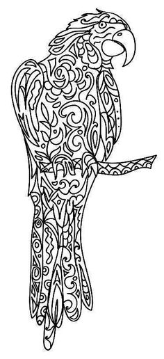 coloring page of a macaw parrot pirate parrot coloring page
