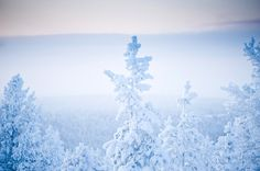 Wonderland by Nina Lindfors, via Behance Amazing Pics, Wonderland, Behance, Snow, Winter, Nature, Magic, Outdoor, Behavior