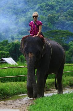 "these photos of jacey on honeymoon at patara elephant farm prompted me to add ""riding an elephant in thailand"" to my bucket list. Oh The Places You'll Go, Places To Travel, Elephas Maximus, Thailand Elephants, Elephant Ride, Le Havre, Amazing Adventures, Africa Travel, Adventure Is Out There"