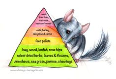 Home – Whimsy's Menagerie & Chinchilla Rescue - Modern Nutrition Pyramid, Nutrition Chart, Nutrition Poster, Nutrition Quotes, Nutrition Tips, Healthy Nutrition, Guinea Pig Toys, Guinea Pigs, Chinchillas