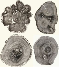 I'm in love with these tree stump woodcut prints by artist Bryan Nash Gill Printed directly from giant cut trees, the process looks . Carta Collage, Tree Rings, Natural Forms, Tree Art, Printmaking, Screen Printing, Art Projects, Creations, Illustration Art