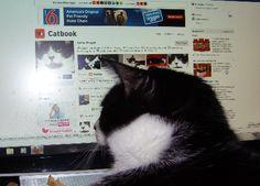 Curtis on Catbook