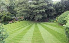 Most creatively striped lawns. Shane Avery, North Warnborough, Hampshire.