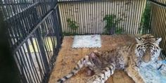 Please Sign and Share - Stop disgraceful attitude to animals at the Zoo in Almaty city, Republic of Kazakhstan!