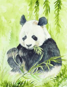 Giant Panda Painting by Morgan Fitzsimons - Giant Panda Fine Art Prints and Posters for Sale