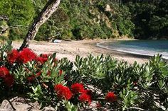 Search residential properties for sale on Trade Me Property, New Zealand's number one real estate website. Living In New Zealand, Kiwiana, Dream Land, Seed Pods, Planting Seeds, Wanderlust Travel, Homeland, Christmas Fun, Property For Sale