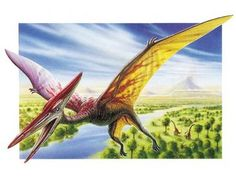 Novelist Sara Marie Hogg asks: Was the big bird seen flying across Texas skies really a pterodactyl? Reptiles And Amphibians, Mammals, Ancient Words, Good Meaning, Dinosaur Pictures, Prehistoric Creatures, Big Bird, Art Party, Illustration