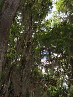 Spiritual trees
